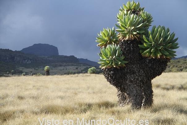 El bosque prehistórico que apareció hace un millón de años en el Kilimanjaro