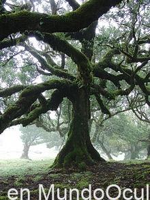 La leyenda del Garoé,el árbol del agua