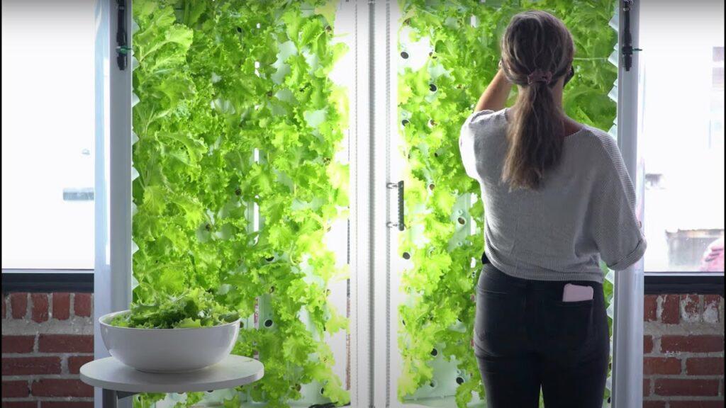 Agricultura vertical