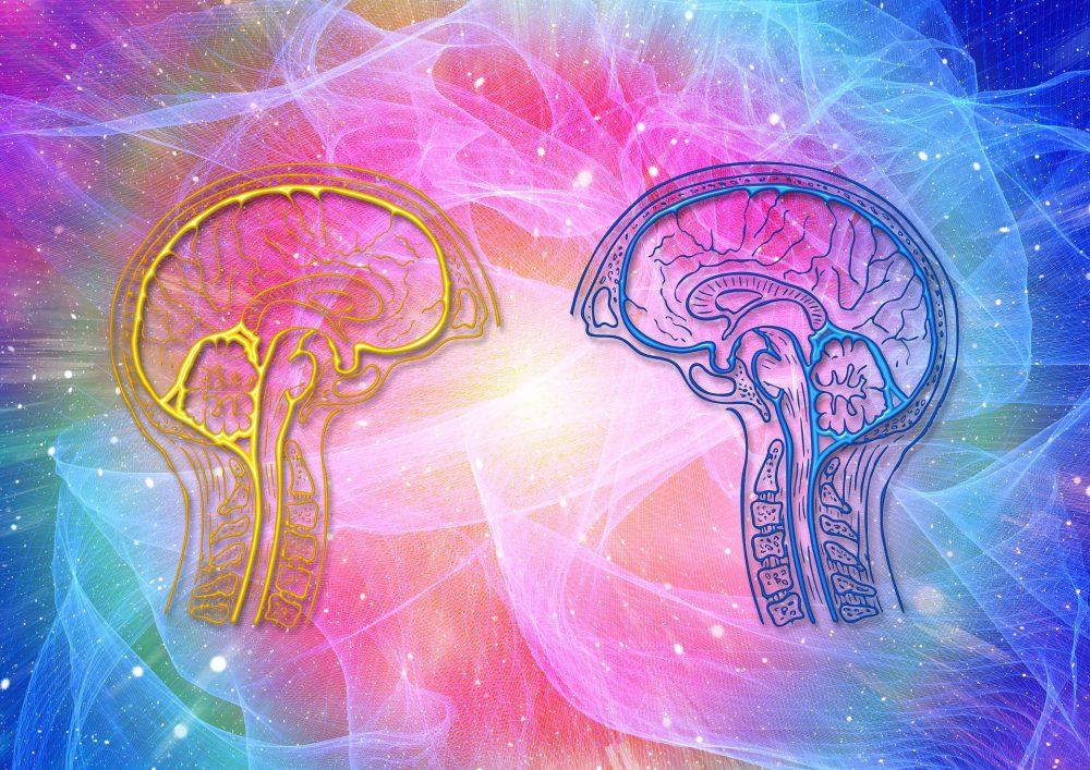 Una teoría revolucionaria sobre la evolución humana sugiere que nuestro cerebro creció sustancialmente con la extinción de grandes especies animales. Crédito: Pixabay