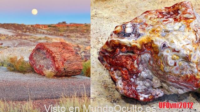 Tronco de árbol de ópalo petrificado ubicado en Arizona tiene aproximadamente 225 millones de años