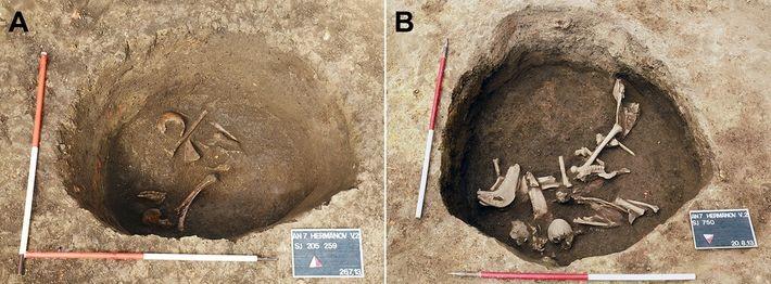 Excavaciones de restos humanos con cráneo alargado