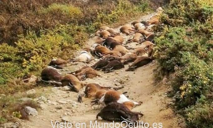 """¿Rayos del cielo? En Portugal, un extraño rayo """"estalló desde el interior"""" 68 cabras 1"""
