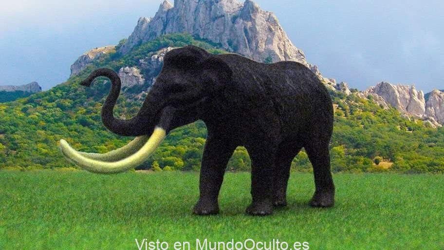 """Biocientíficos poseen un reciente plan para """"volver a la vida"""" al extinto mamut lanudo"""